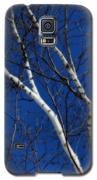 Galaxy S5 Case featuring the photograph White Birch Blue Sky by Smilin Eyes  Treasures