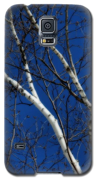 White Birch Blue Sky Galaxy S5 Case by Smilin Eyes  Treasures