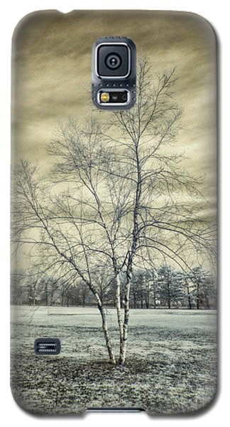White Birch In Cantiague Park Galaxy S5 Case