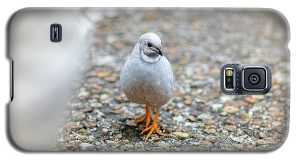 White Bird Sneaking Through Galaxy S5 Case