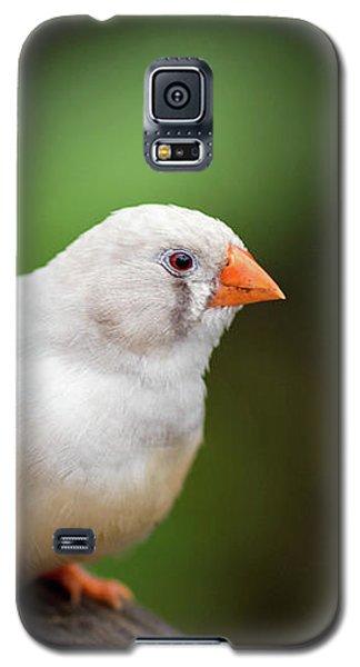 White Bird Standing On Deck Galaxy S5 Case