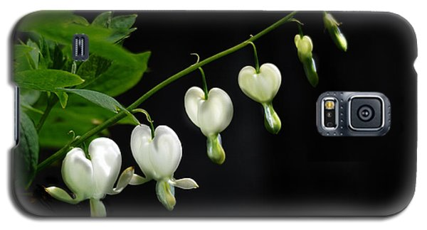 Galaxy S5 Case featuring the photograph White Bleeding Hearts by Susan Capuano