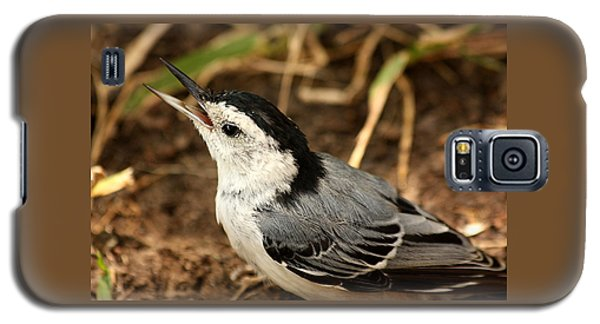 White Breasted Nuthatch 2 Galaxy S5 Case