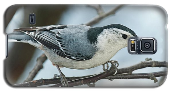 Galaxy S5 Case featuring the photograph White Breasted Nuthatch 2017 2 by Lara Ellis