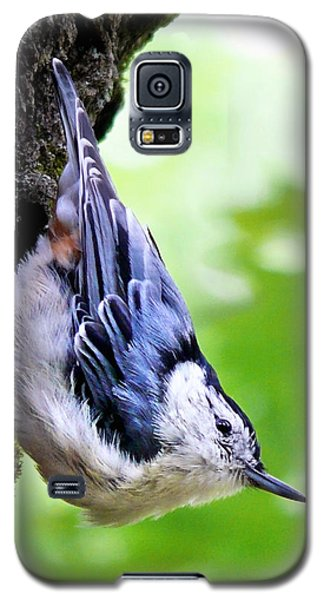 White Breasted Nuthatch Galaxy S5 Case