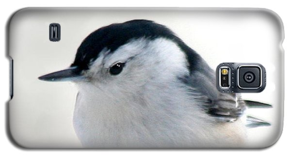 White Breasted Nuthatch Galaxy S5 Case by Diane Merkle