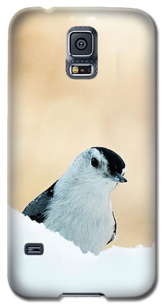White Breasted Nuthatch In Snow Galaxy S5 Case
