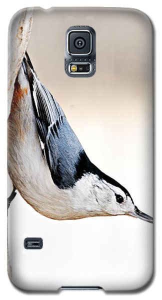 White-breasted Nuthatch Galaxy S5 Case
