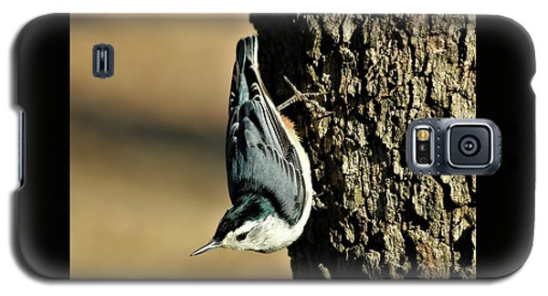 White-breasted Nuthatch On Tree Galaxy S5 Case