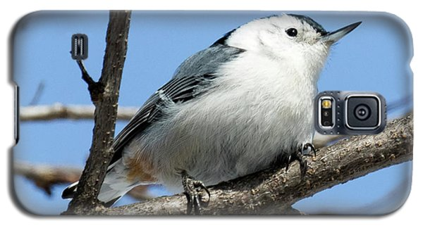 White-breasted Nuthatch Perched Galaxy S5 Case