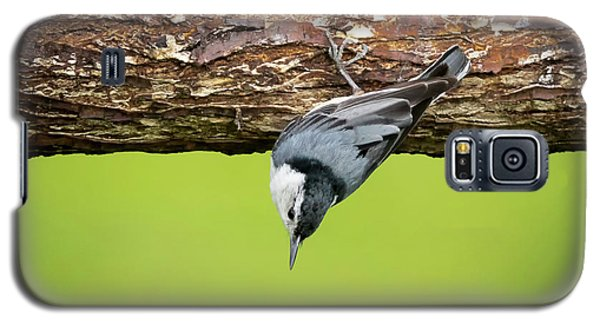 Galaxy S5 Case featuring the photograph White-breasted Nuthatches by Ricky L Jones