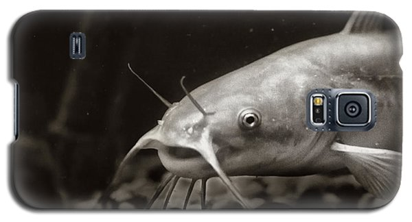 Catfish Galaxy S5 Case - White Cat by Susan Capuano