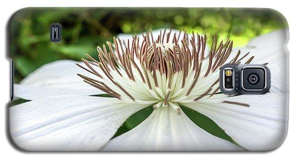 White Clematis Flower Garden 50146 Galaxy S5 Case