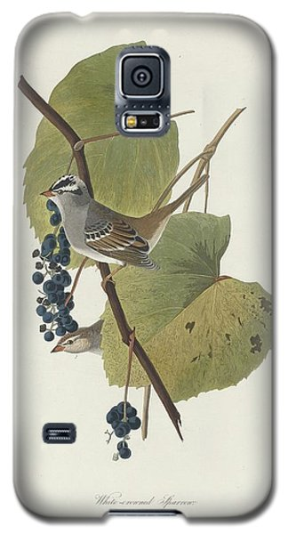 White-crowned Sparrow Galaxy S5 Case by Dreyer Wildlife Print Collections