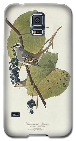 White-crowned Sparrow Galaxy S5 Case by Rob Dreyer
