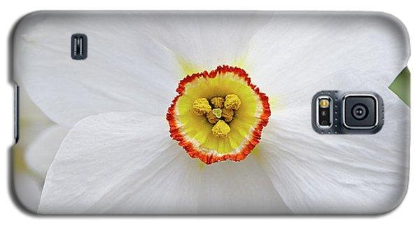 White Daffodil Galaxy S5 Case