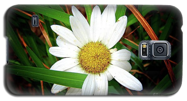 White Daisy Galaxy S5 Case