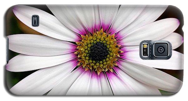 White Daisy Galaxy S5 Case