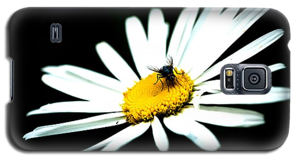 Galaxy S5 Case featuring the photograph White Daisy Flower And A Fly by Alexander Senin