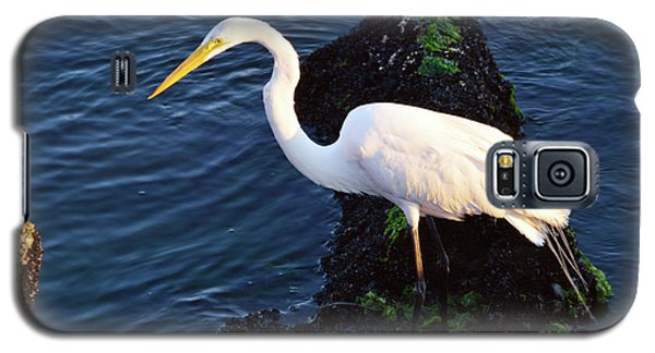 White Egret At Sunrise - Barnegat Bay Nj  Galaxy S5 Case