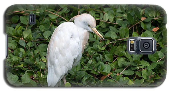 Galaxy S5 Case featuring the photograph White Egret by Monte Stevens
