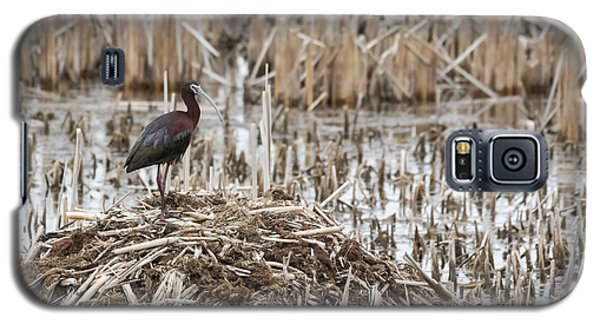 White-faced Ibis 2017-1 Galaxy S5 Case by Thomas Young