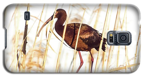 Galaxy S5 Case featuring the photograph White Faced Ibis In Reeds by Robert Frederick