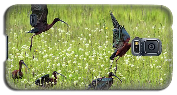 White-faced Ibis Rising, No. 1 Galaxy S5 Case