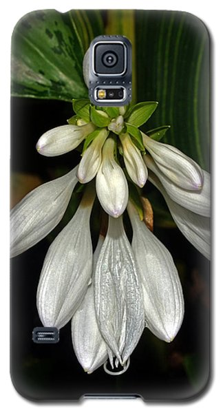Galaxy S5 Case featuring the photograph Hosta - Royal Standard  by George Bostian