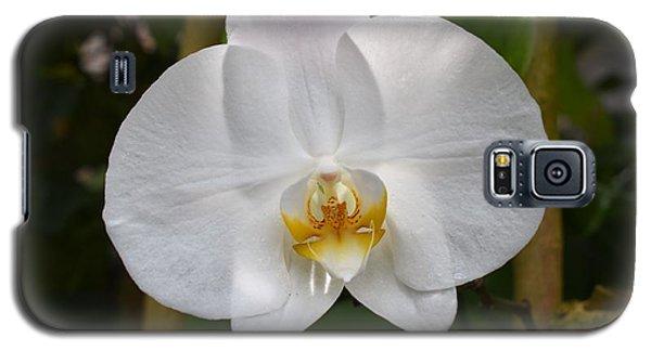 Phalaenopsis Sanderiana Galaxy S5 Case