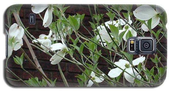 White Flowering Dogwood Galaxy S5 Case