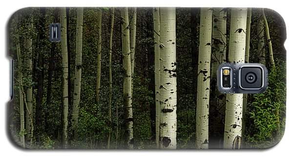 Galaxy S5 Case featuring the photograph White Forest by James BO Insogna