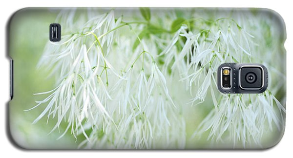 White Fringetree Galaxy S5 Case