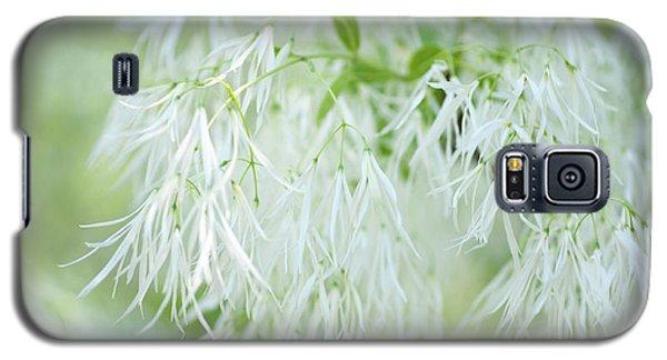 White Fringetree Galaxy S5 Case
