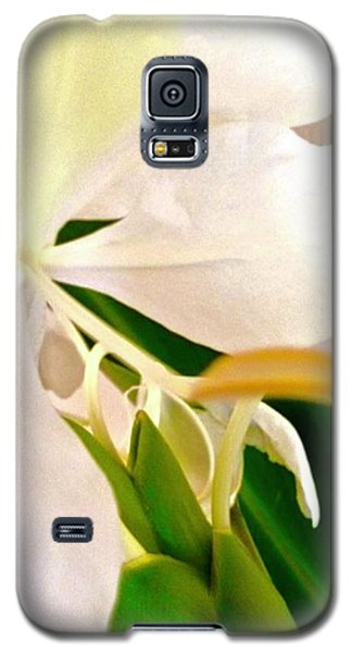 White Ginger Close Up Abstract Galaxy S5 Case