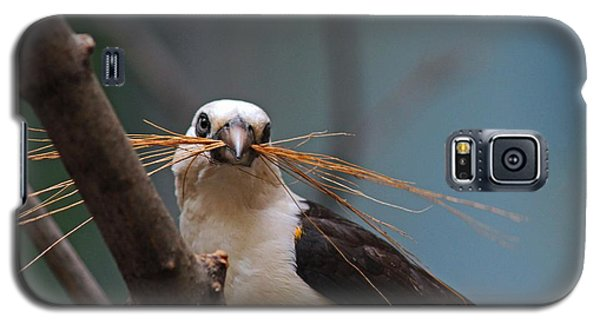 White-headed Buffalo Weaver Galaxy S5 Case