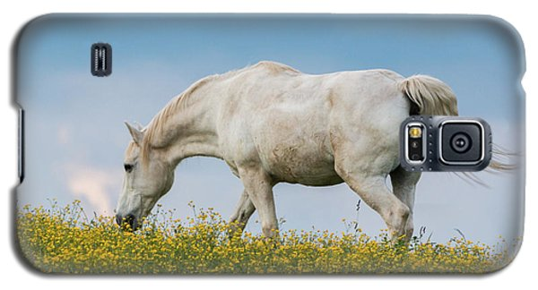 White Horse Of Cataloochee Ranch 2 - May 30 2017 Galaxy S5 Case