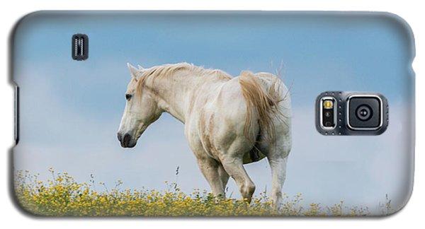 White Horse Of Cataloochee Ranch - May 30 2017 Galaxy S5 Case