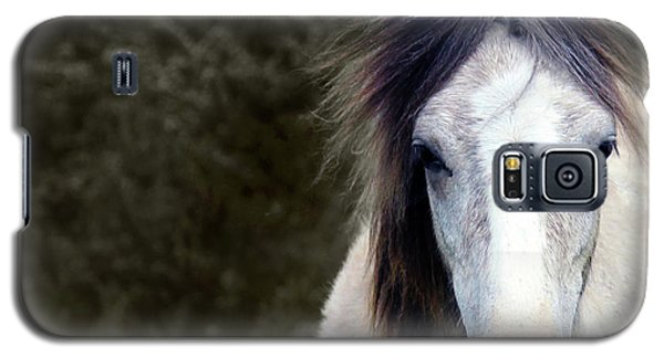 White Horse Galaxy S5 Case by Sebastian Mathews Szewczyk