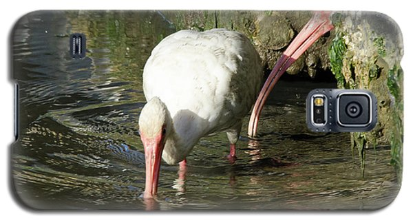 Galaxy S5 Case featuring the photograph White Ibis Couple by George Randy Bass