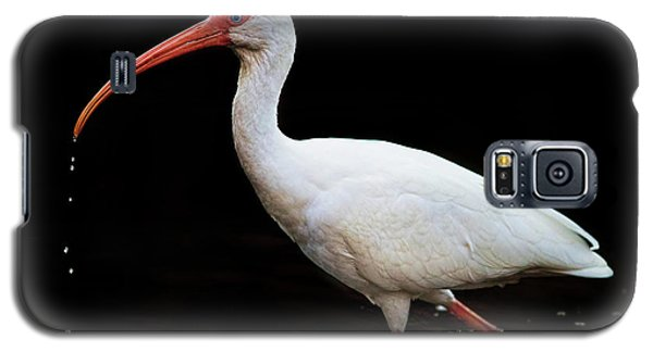 White Ibis Dripping Galaxy S5 Case