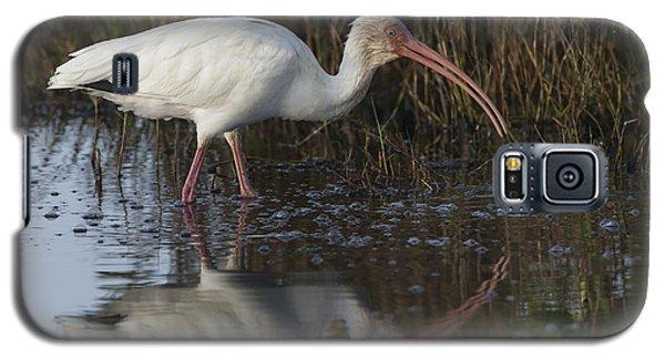 White Ibis Feeding Galaxy S5 Case