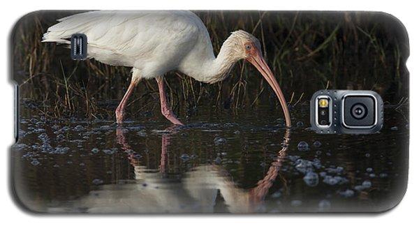 White Ibis Feeding In Morning Light Galaxy S5 Case