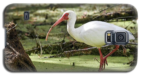 Galaxy S5 Case featuring the photograph White Ibis by Gary Wightman