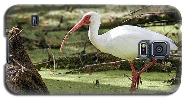 White Ibis Galaxy S5 Case