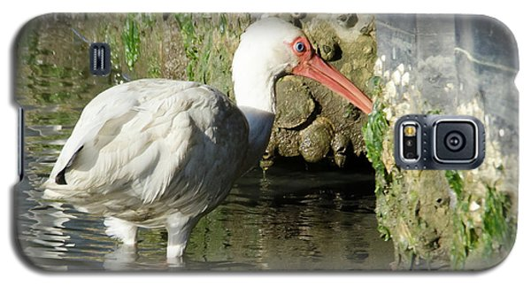 Galaxy S5 Case featuring the photograph White Ibis Headed Home by George Randy Bass