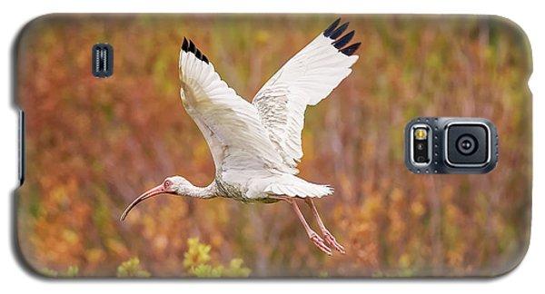 White Ibis In Hilton Head Island Galaxy S5 Case
