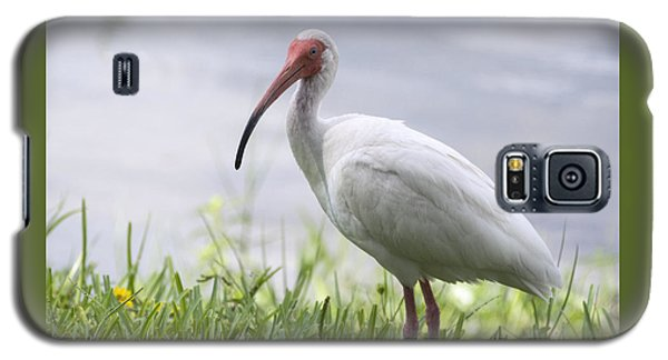 White Ibis  Galaxy S5 Case by Saija  Lehtonen