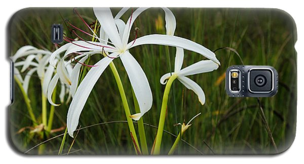 White Lilies In Bloom Galaxy S5 Case
