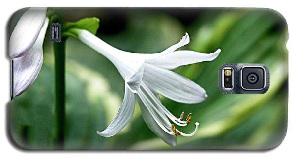 White Lily 1 Galaxy S5 Case
